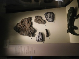Tetrapod fossils